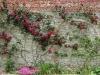 Certosa1515_stagioni_11