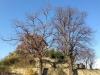Certosa1515_stagioni_30