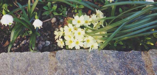 Certosa1515-Springtime